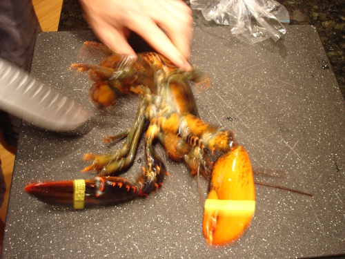 action shot of the lobster getting frisky