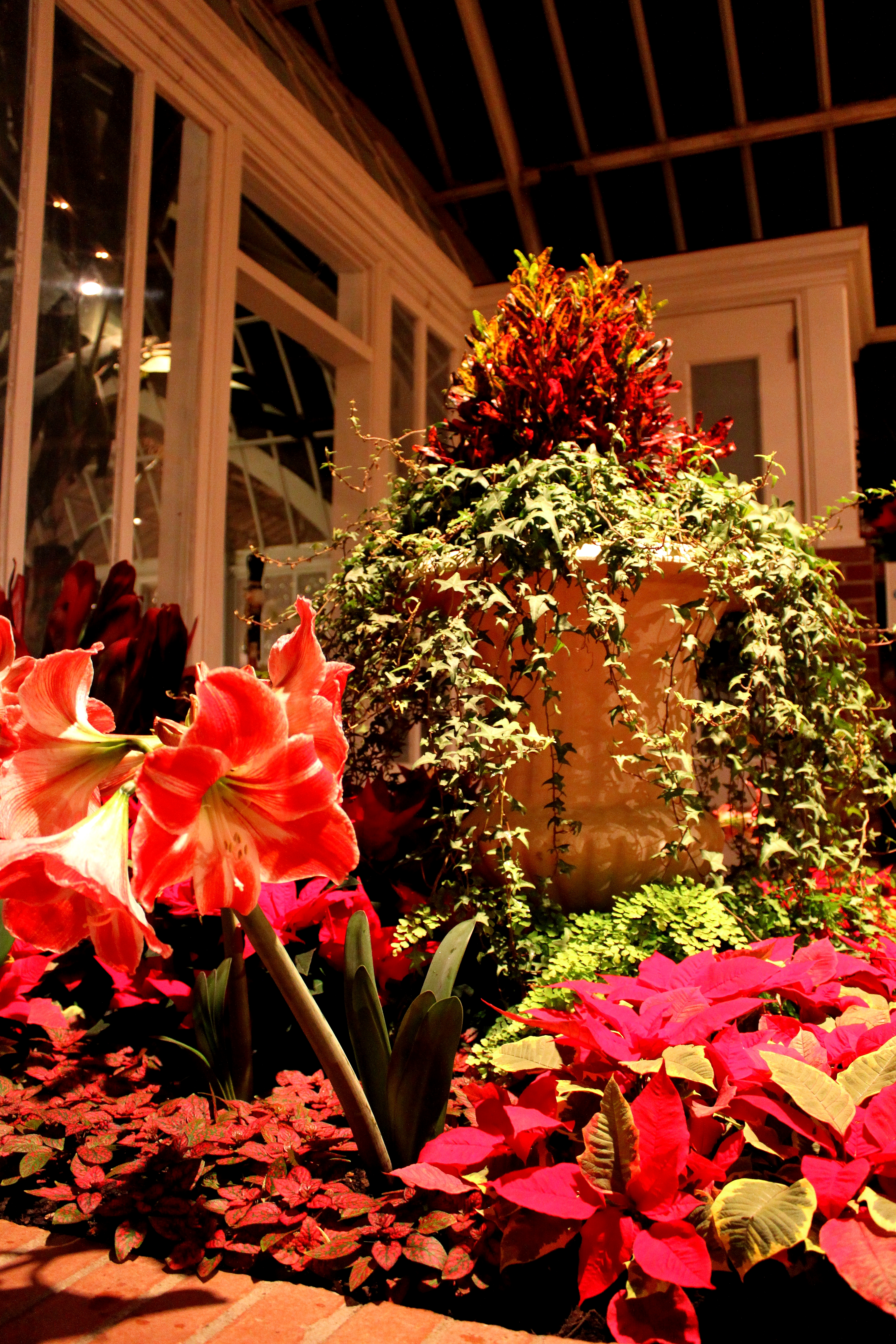 Phipps winter flower show snickie httpphippsnservatory dhlflorist Choice Image